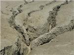 Vulcanii noroiosi de la Berca, Buzau 11